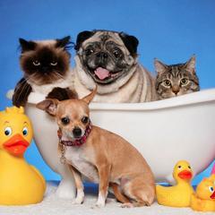 Petcix Pet Photography