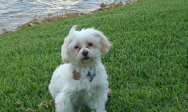 Dog Friendly Beaches Broward County Fl