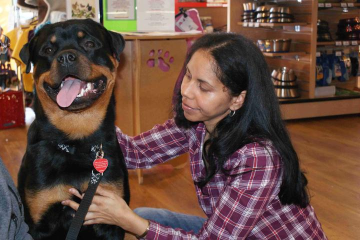 Pet Friendly Canine Therapeutic Massages