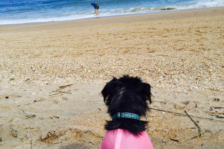Pet Friendly Vilano Beach