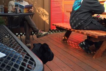Pet Friendly Harbor Cafe