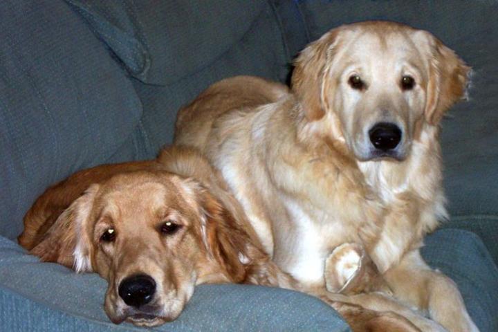 Pet Friendly Animal Friends Pet Sitting, LLC