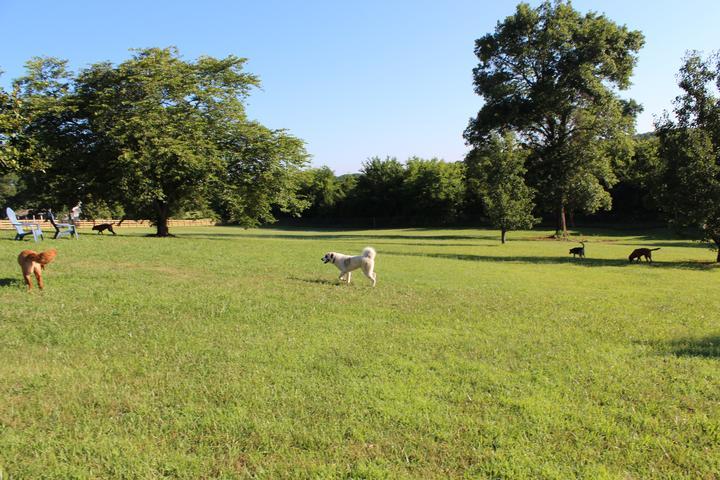 Pet Friendly Good Dog Kennel-Free Retreat