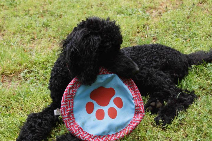 Pet Friendly 2 Paws Up Inc.