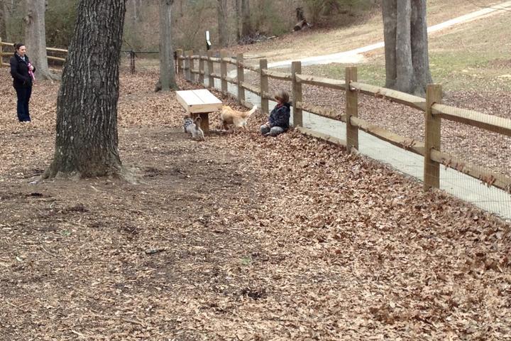 Pet Friendly Simpsonville Dog Spot