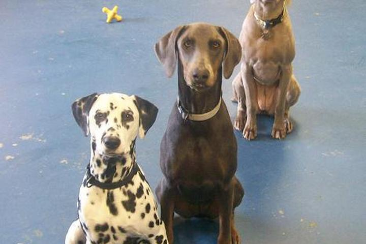 "Pet Friendly Dogs ""R"" Us, LLC"