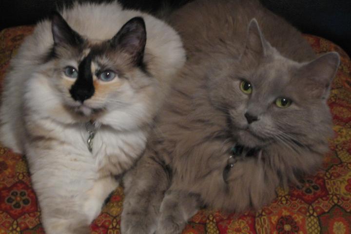 Pet Friendly Comfy Critters Pet Sitting