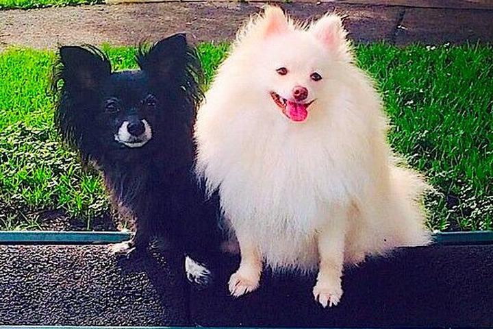 Pet Friendly Dog Swim and Bark Park at Snyder Park
