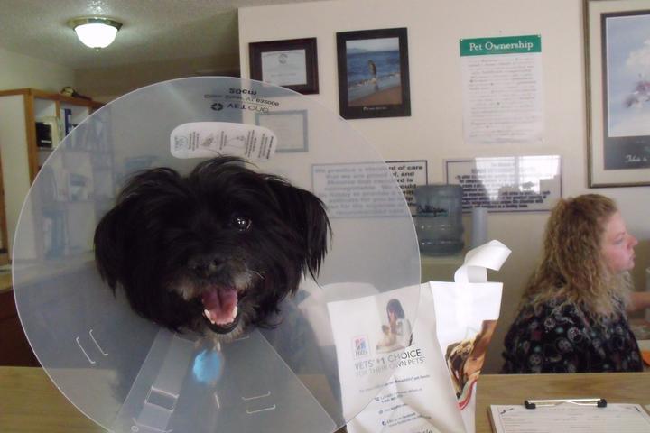 Pet Friendly Kanab Veterinary Hospital