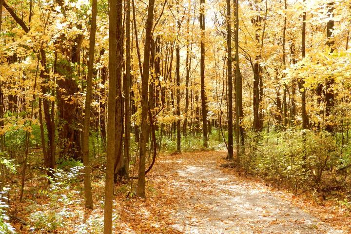 Pet Friendly Gallant Woods Preserve