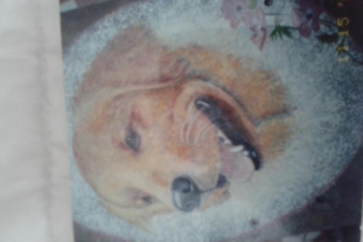 Pet Friendly Art by Dar
