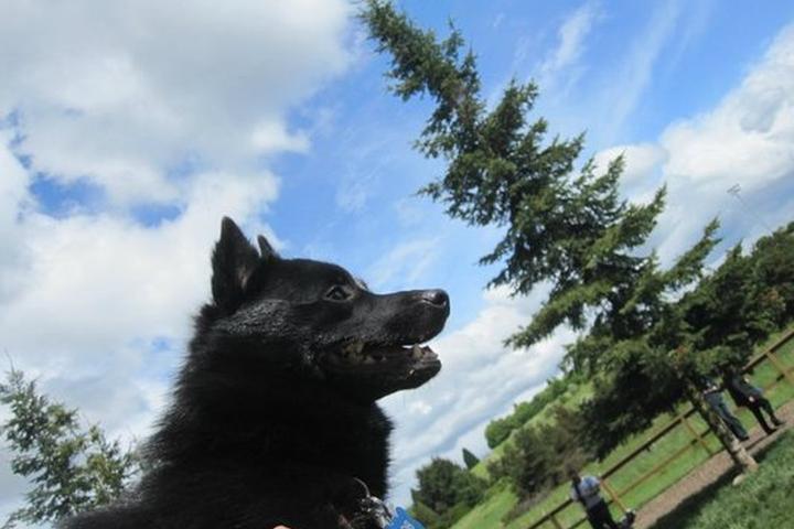 Pet Friendly Hazalia Field Dog Park