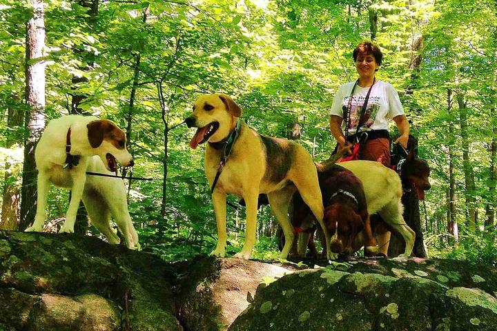 Pet Friendly Hike Hounds Canine Adventures