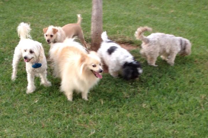Pet Friendly Wells Park Dog Run
