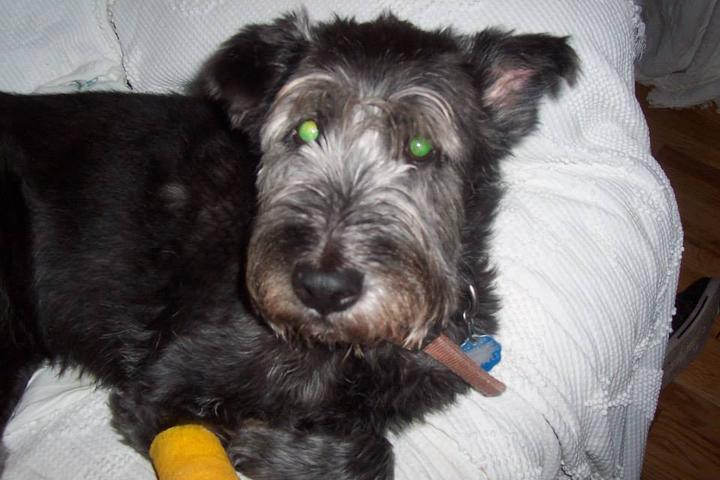 Pet Friendly N.C. Professional Pet Service