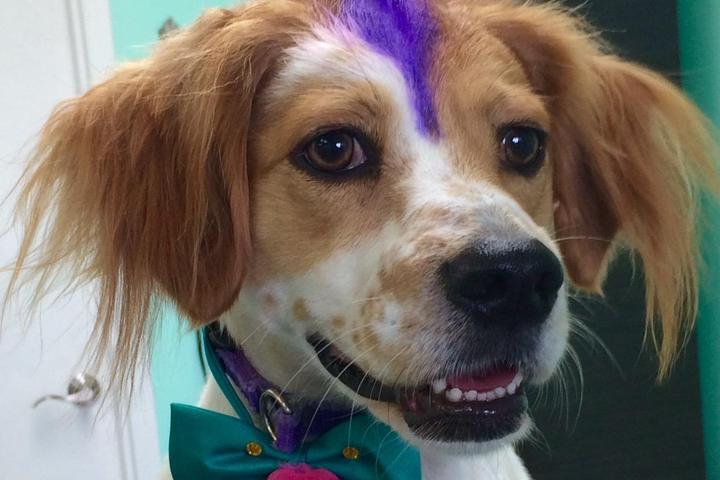 Pet Friendly The Upscale Tail, Pet Grooming & Wellness Salon