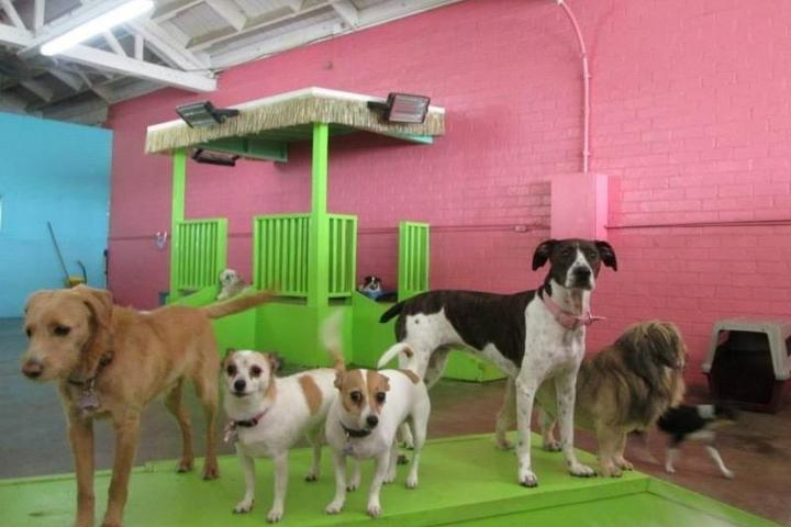 Pet Friendly Club Fido Dog Daycare & Boarding