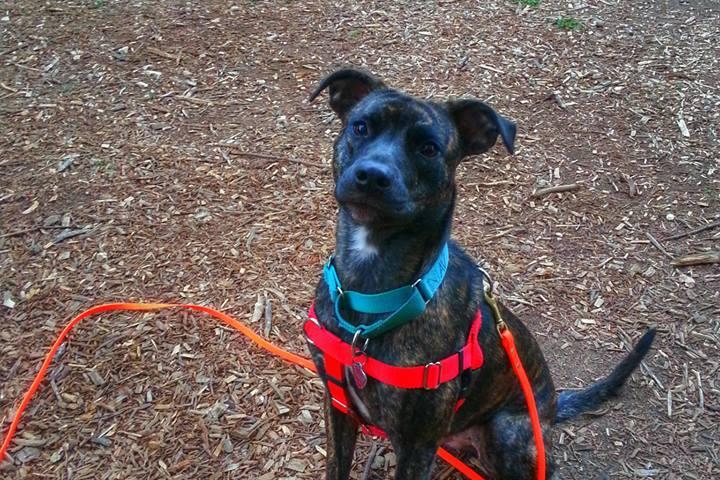 Pet Friendly emBARK Canine Coaching