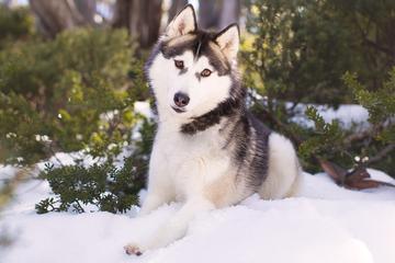 Pet Friendly Akemi Photography ~ Melbourne's Pet Photographer