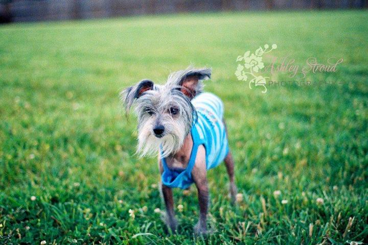 Pet Friendly Ashley Stroud Photography