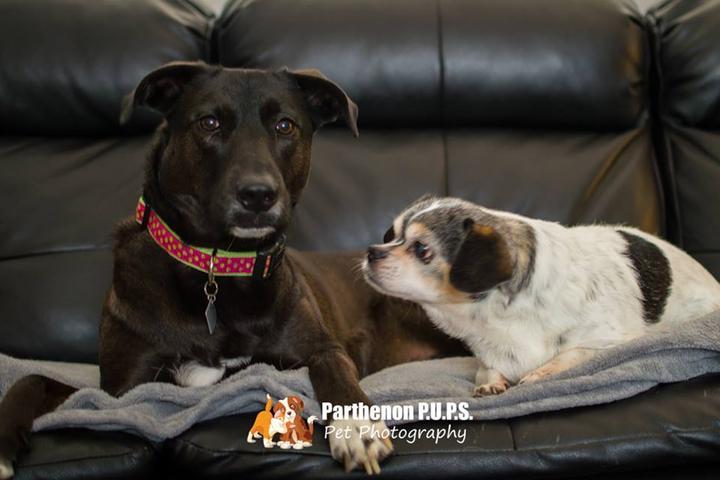 Pet Friendly Parthenon P.U.P.S. Professional Pet Services