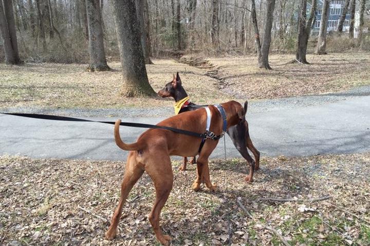 Pet Friendly McLean Central Park