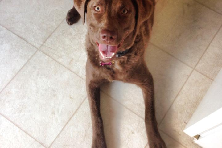 Pet Friendly Beyond Barks, LLC
