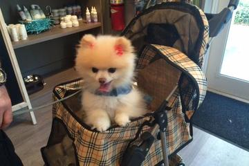 Pet Friendly Chewy Chic Dog Grooming