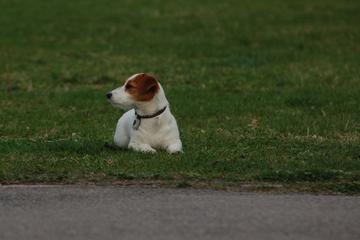 Pet Friendly Hundekurs på Norges Hundetrenerforbund