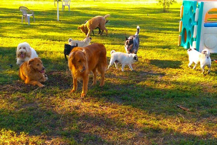 Pet Friendly Happy Paws Ranch