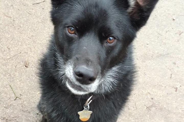 Pet Friendly Highland Dog Park