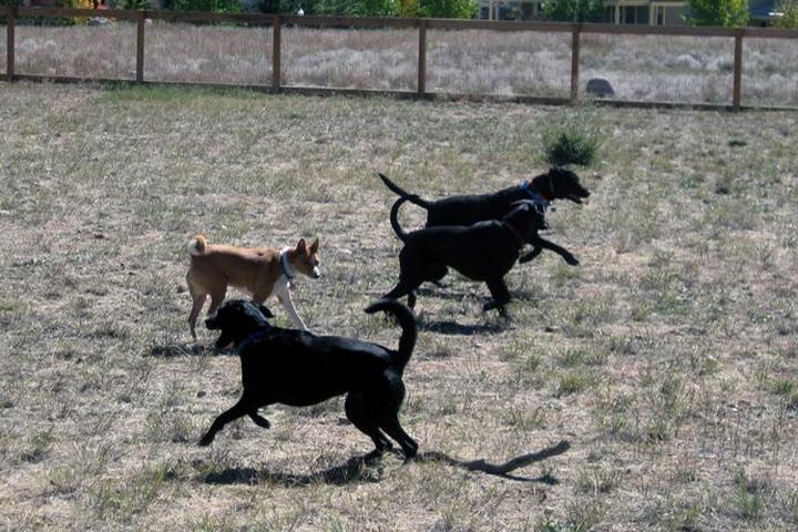 Pet Friendly Riverpark Dog Park