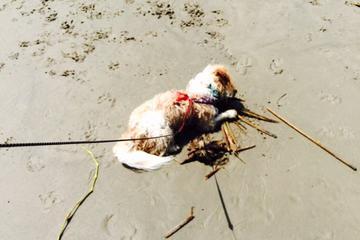 Pet Friendly East Beach