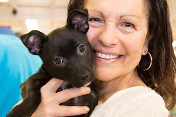 Pet Friendly A Forever Home Rescue Foundation
