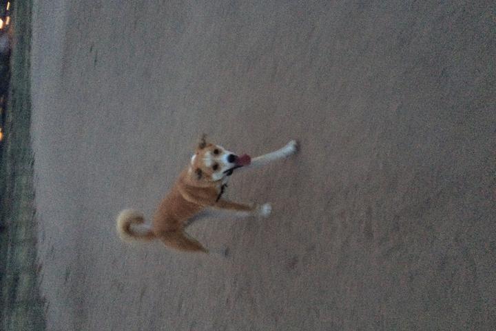 Pet Friendly Rover's Run Dog Park at Redstone Park