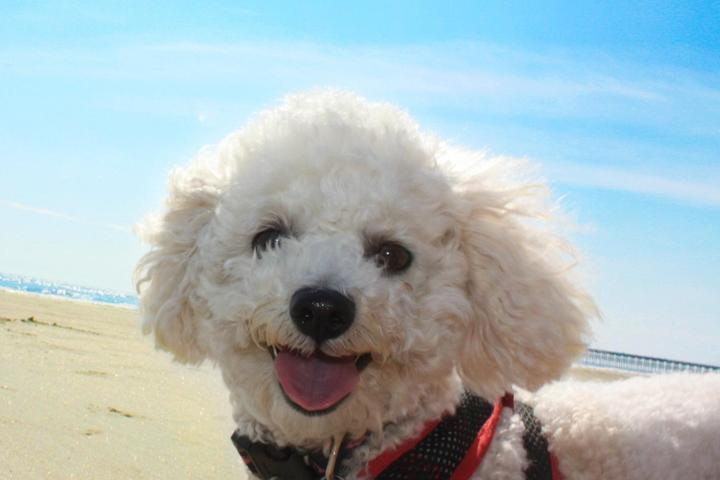 Pet Friendly Folly Beach
