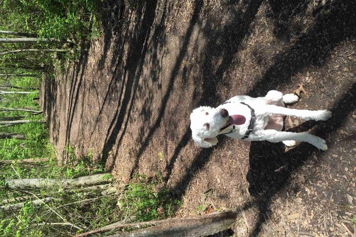 Pet Friendly William A Pitts Dog Park