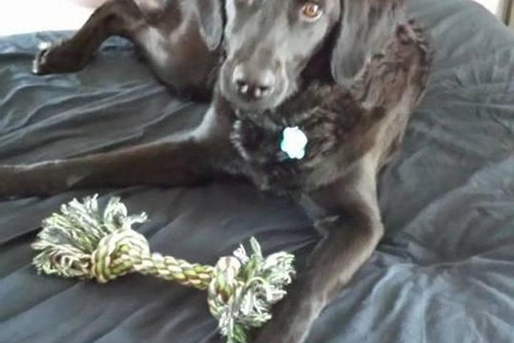 Pet Friendly All Paws Pet-Sitting