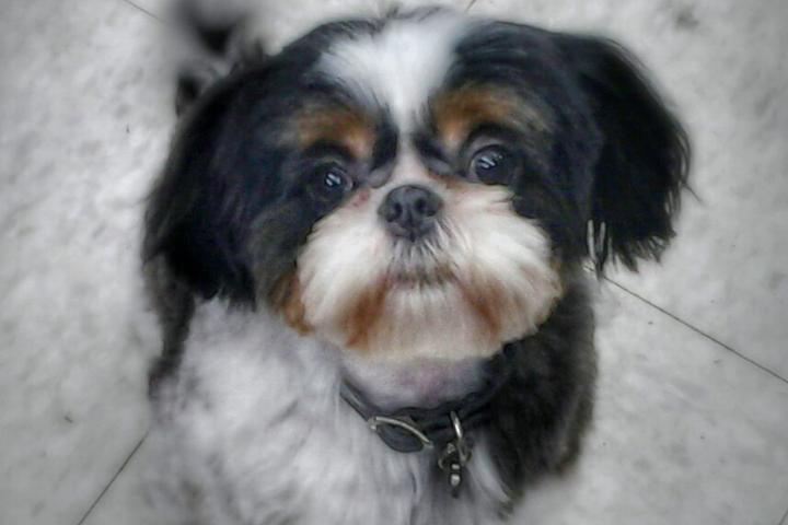 Pet Friendly My Dog's Hair Salon