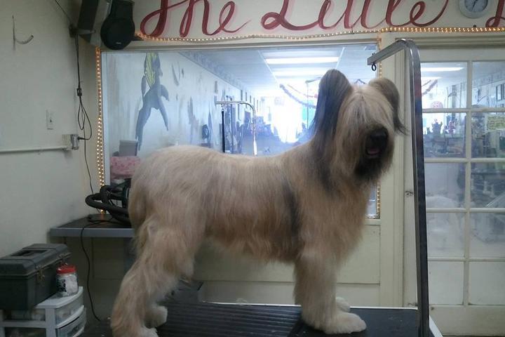Pet Friendly The Little Dog House LLC