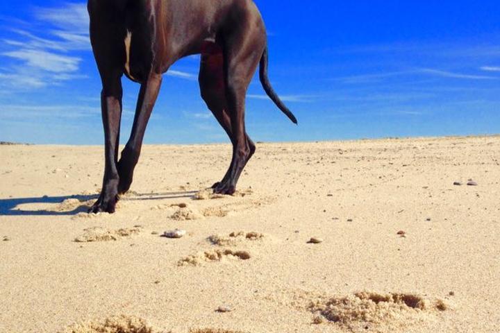 Pet Friendly Horseneck Beach
