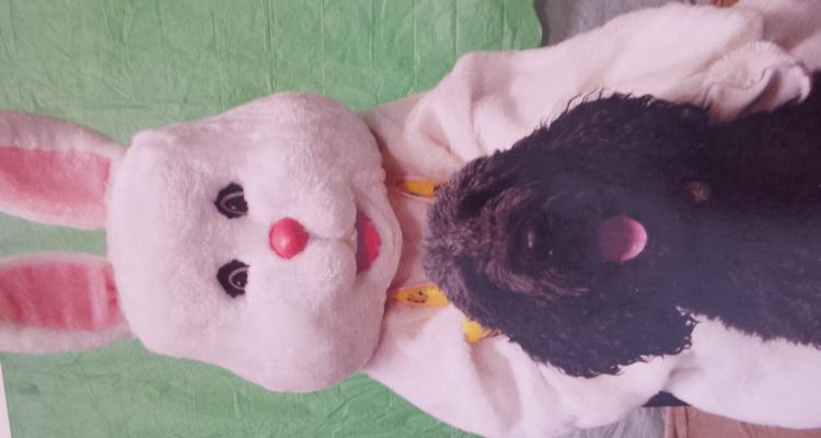 K-9's & Feline's Compassionate Care