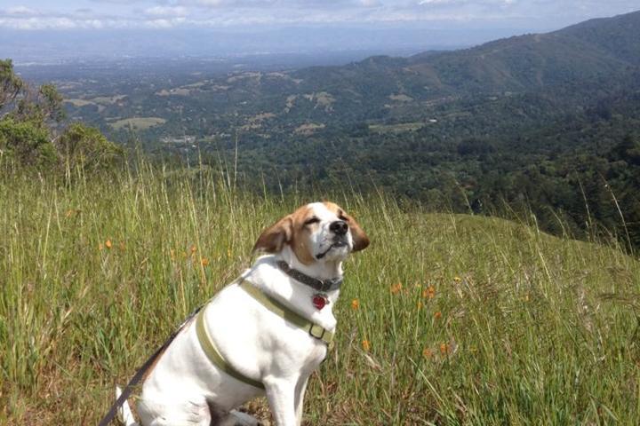 Pet Friendly Windy Hill Open Space Preserve