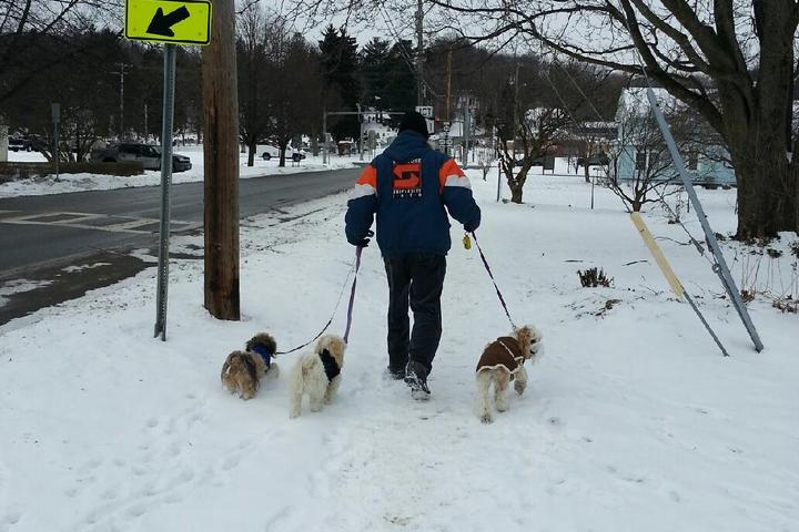Pet Friendly Ed's Dog Walking