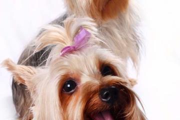 Pet Friendly Pet Photography
