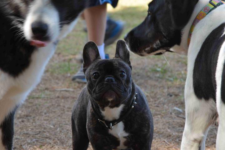 Pet Friendly Bonita Springs Dog Park