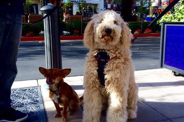 Pet Friendly Santana Row