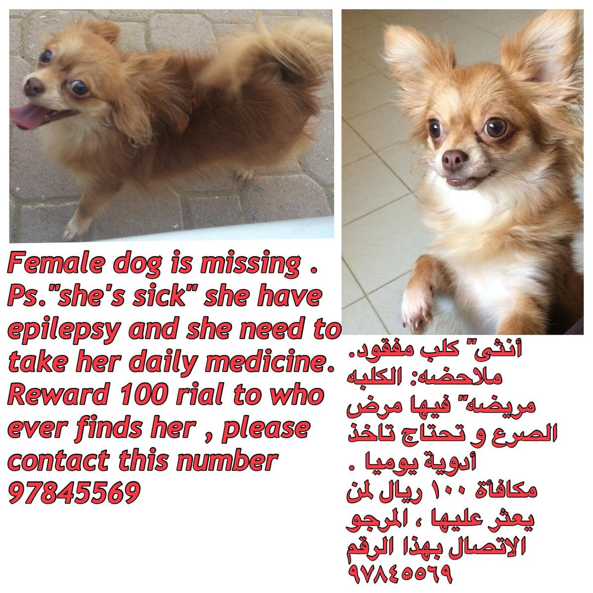 Sick dog is missing