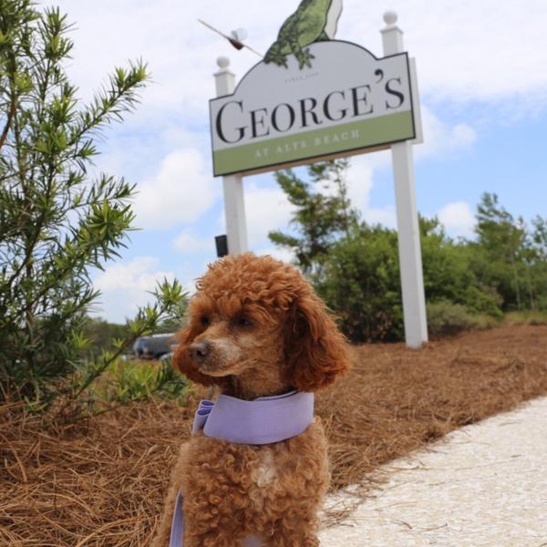 Dog Friendly Activities Sarasota Fl