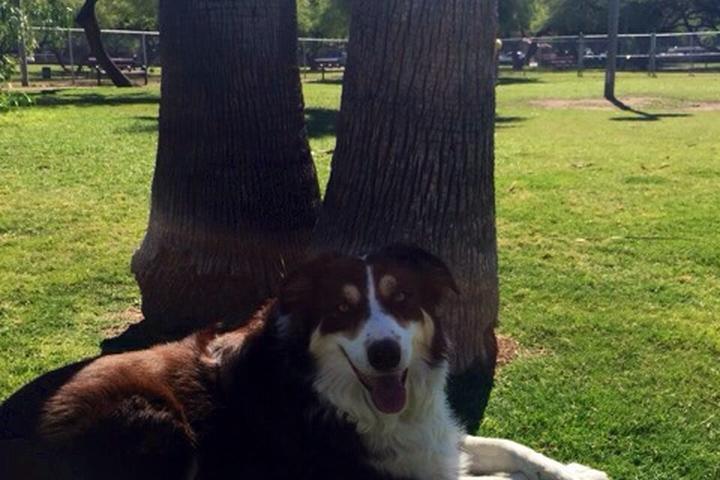 Pet Friendly Papago Bark Park at Papago Park